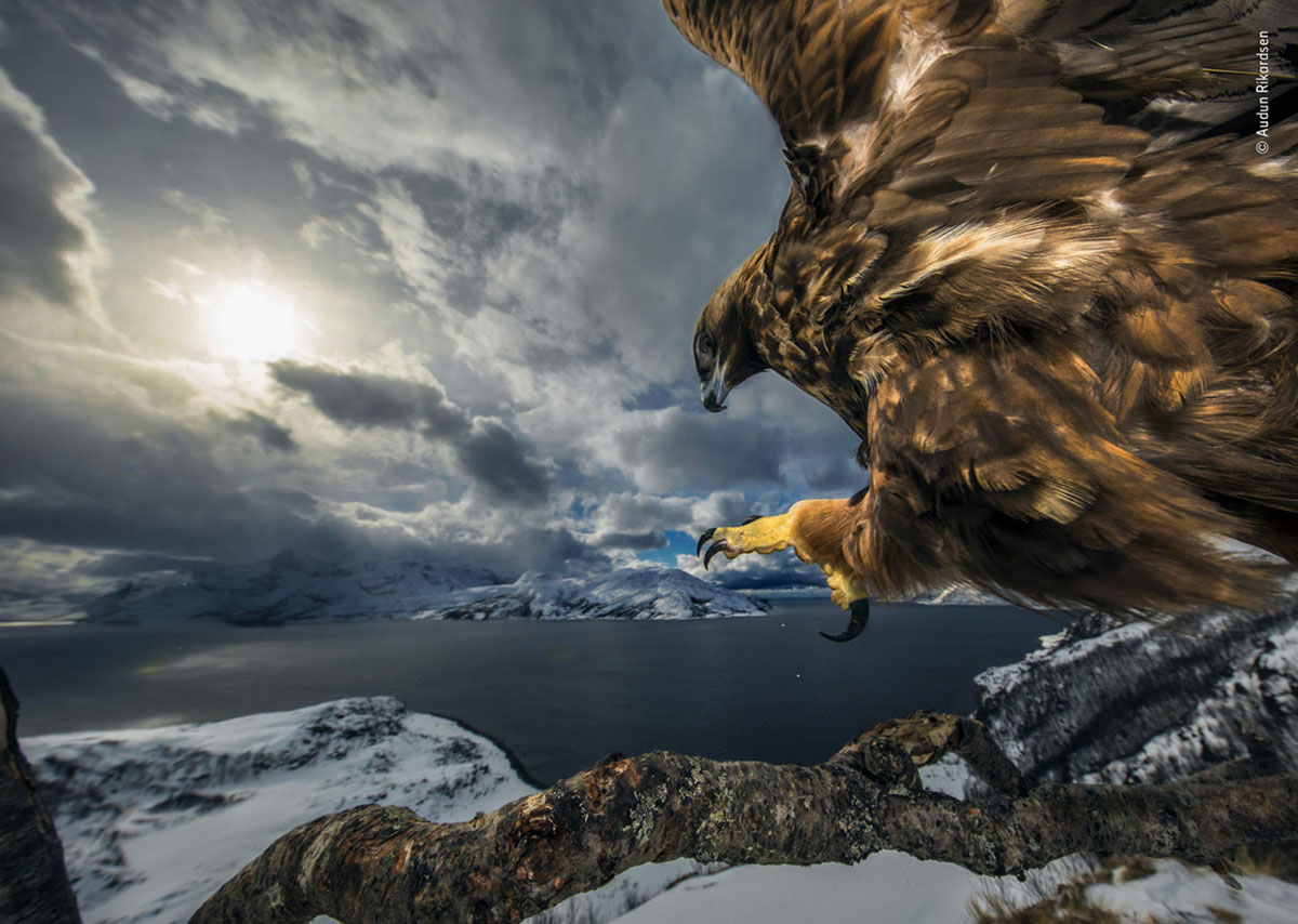 Land of the eagle by Audun Rikardsen, Norway. Winner 2019, Behaviour: Birds